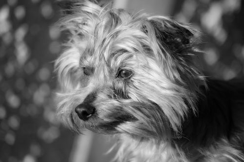 dog animal doggie