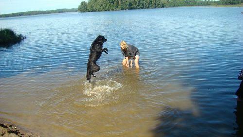 dog happy summer
