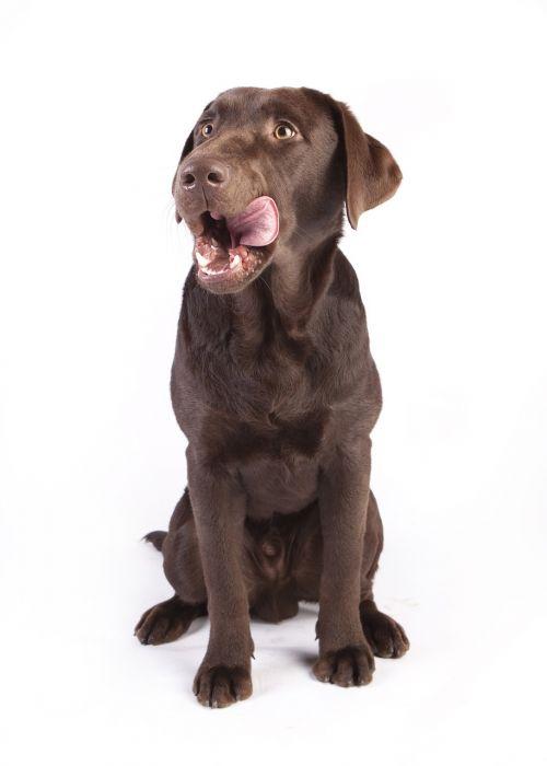 dog reward dog food