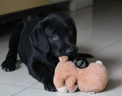 dog sell meng play