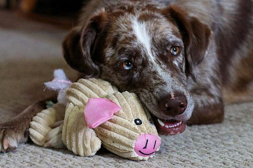 dog toy cute