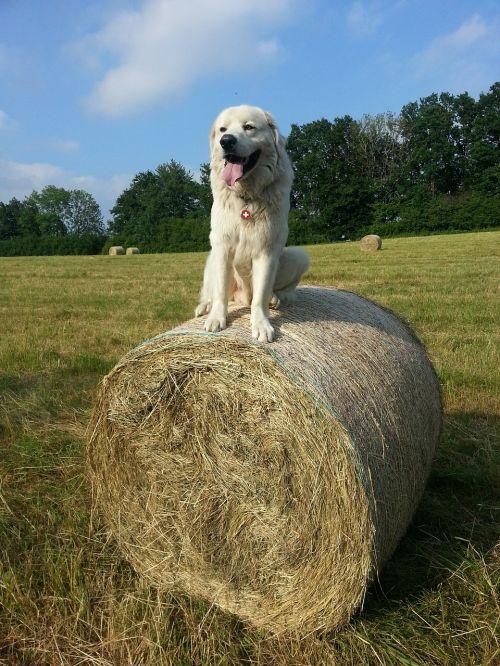 dog white dog white