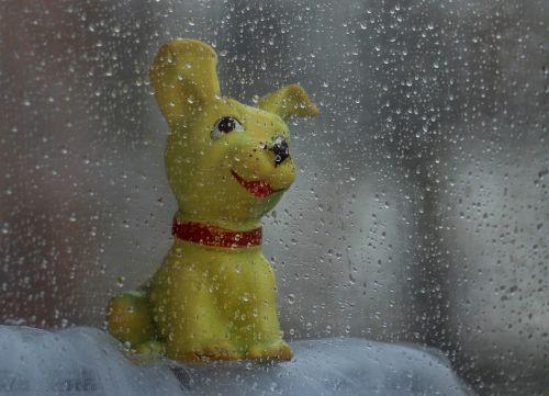 dog toy rain