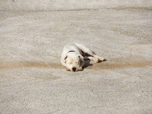 dog sleepy lazy