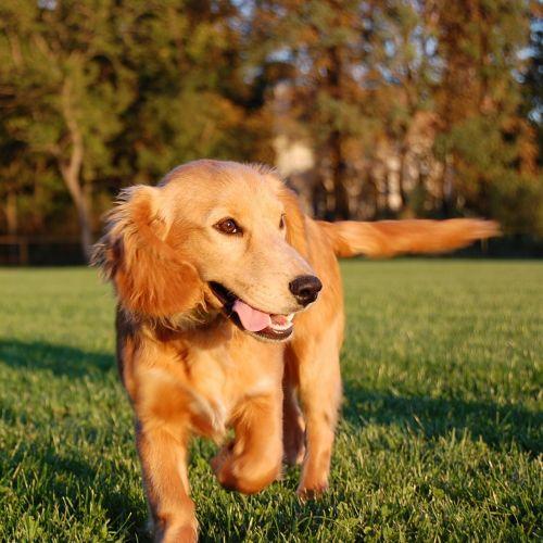 dog running dog run