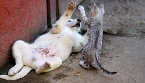 šuo,katė,Draugystė,žaisti,juokinga