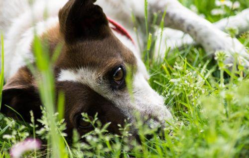 dog garden pet