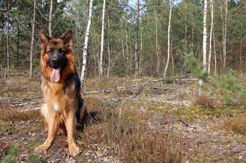 dog spring forest