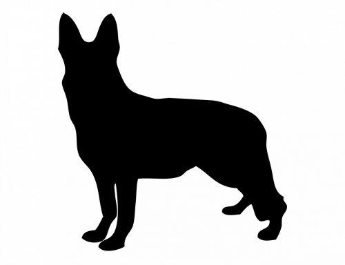 dog german shepherd gsd