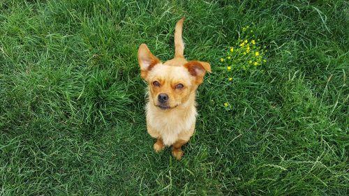 šuo,jaunas šuo,šunys,šuniukas,juokingi šunys,geltonas šuo,geltonieji šunys,šuo nosis,šunys,jauni šunys,šuniukas,kilmės,šunys,žavinga,Cub,whelp,vidaus,gyvūnas,naminis gyvūnėlis,mielas šuo,draugas,juokinga,jaunas,laimingas,šunų rūšys,šunų nuotraukos,Šypsokis šunys,tingus šuo,šuo veido,šuo mielas,šuo juokingas,šuo juokiasi,šuniukai