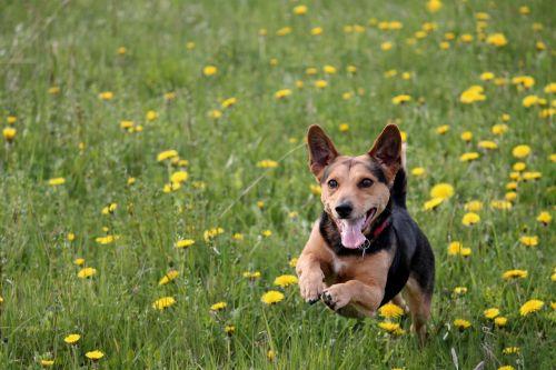 dog meadow play race