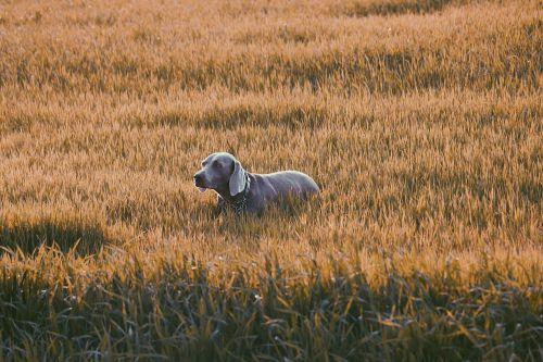 dog grass pet