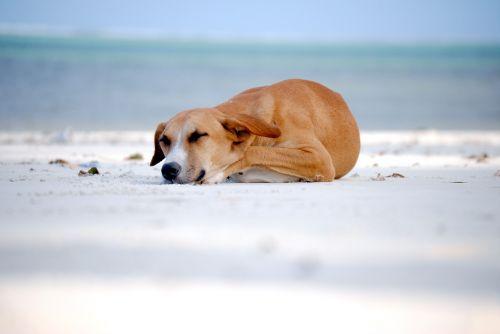 dog sleeping dog sleeping