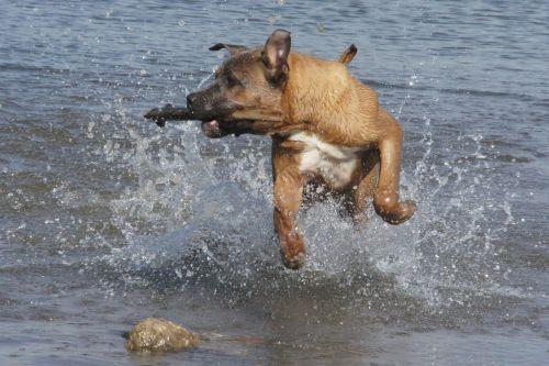 dog water fetch
