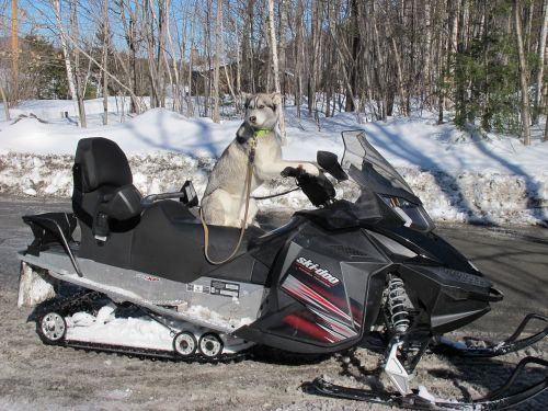 dog snowmobile québec