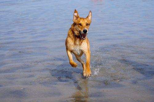 dog running water