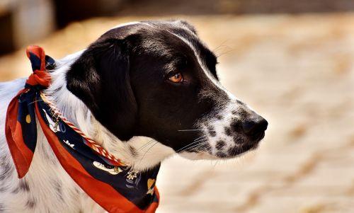 dog animal view