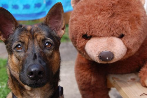 dog bear cuddly toy