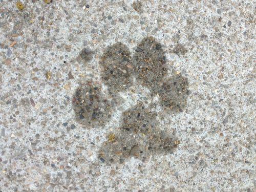dog paw paw print