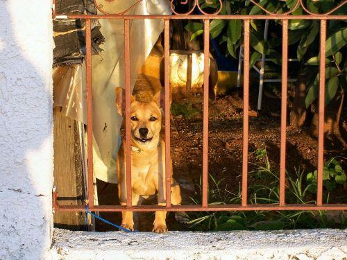 dog pet brown