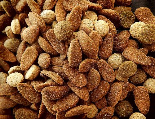 dog feed animal