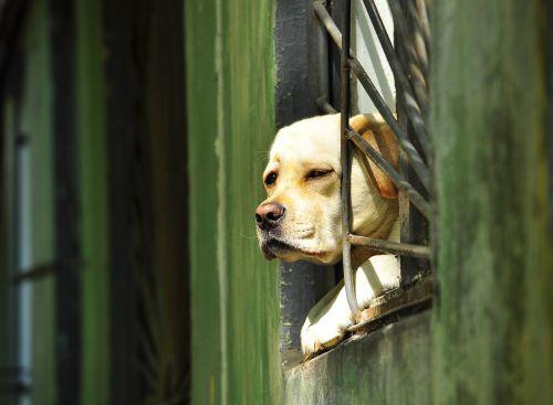 dog window grille
