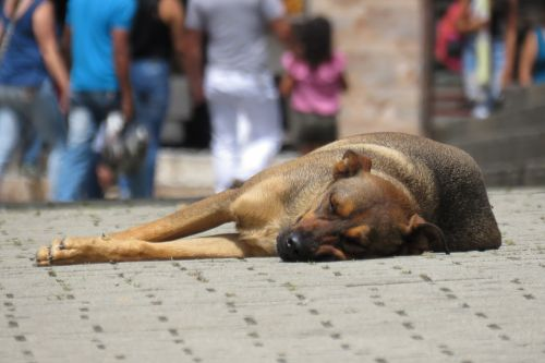 dog street canine