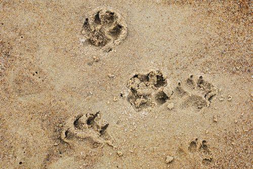 dog doggy dog paws
