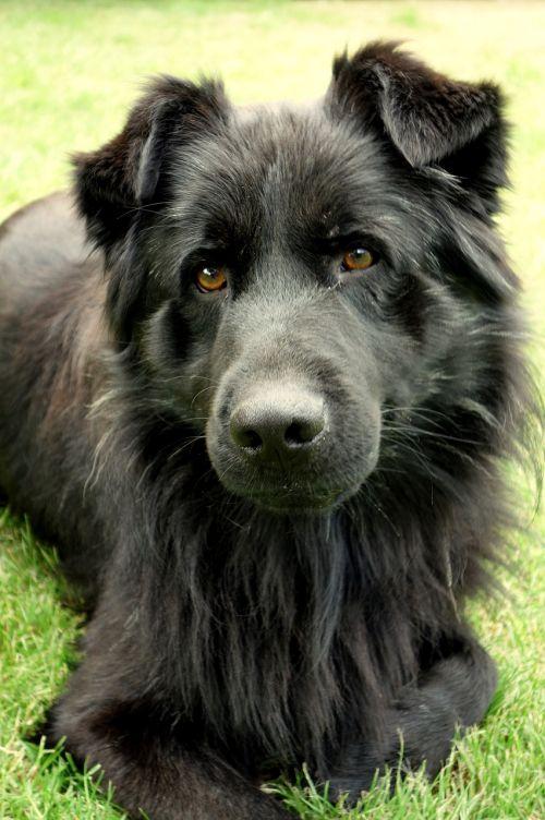 dog animal fur