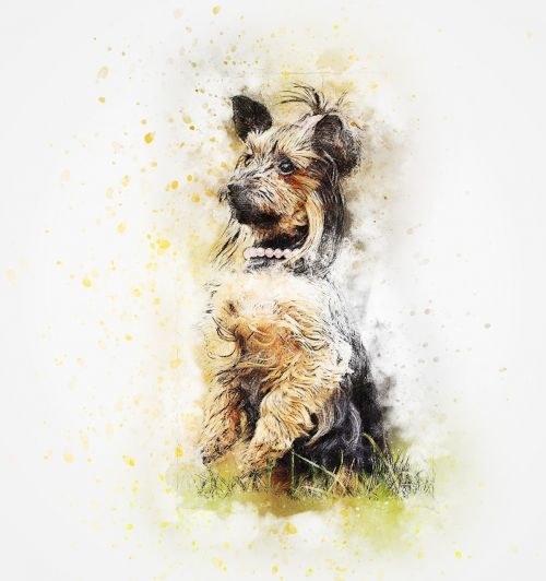 dog portrait pet