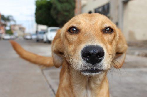 dog animal abuse street