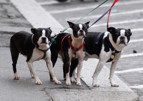 dog street spacer