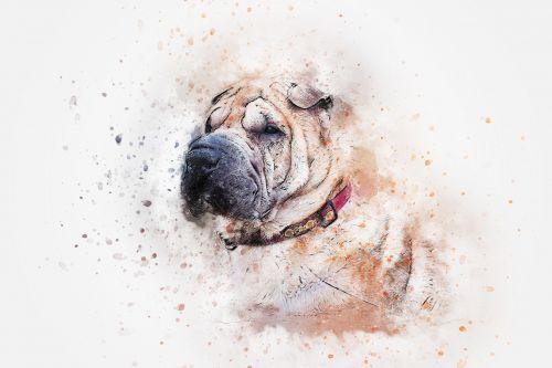 dog portrait sharpei