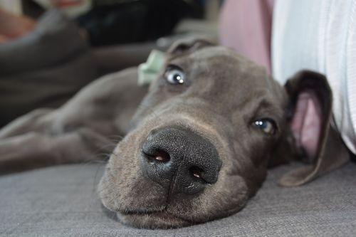 dog puppy nose