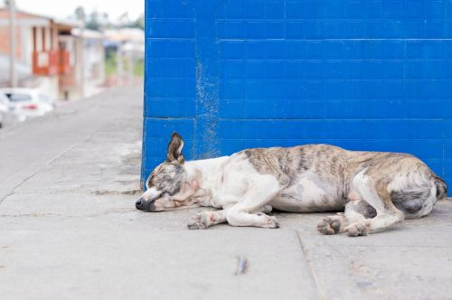 dog puppy asleep