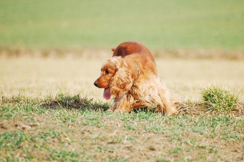 dog doggy freedom