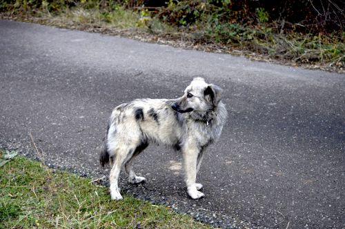 dog road pastor