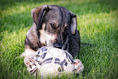dog animal wildlife photography