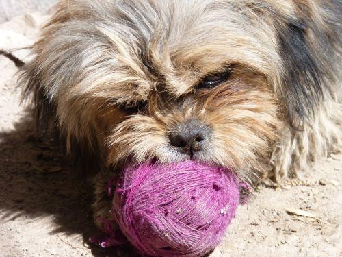 dog playful brown