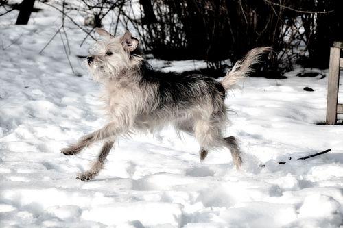 dog small dog awakened