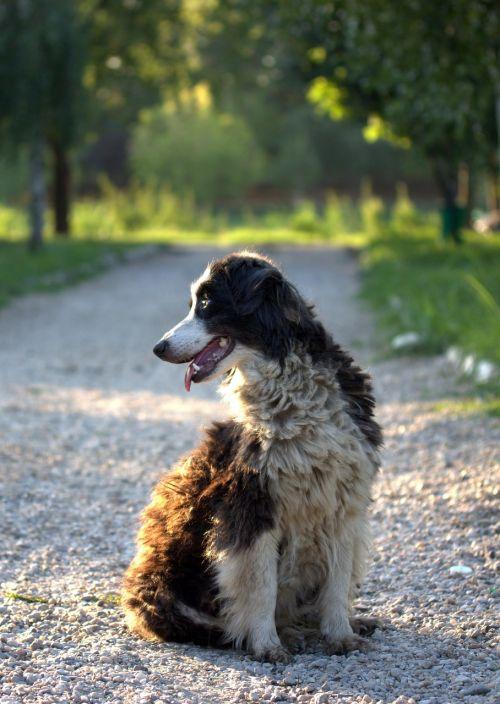 dog canine white