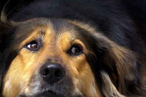 dog nose close