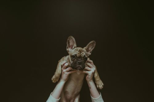dog puppy animal