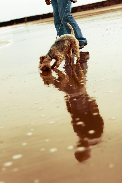 dog pet walking