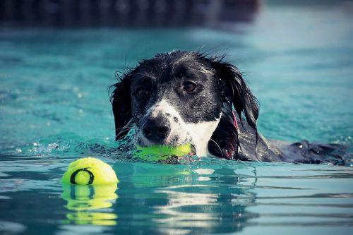 dog swim water
