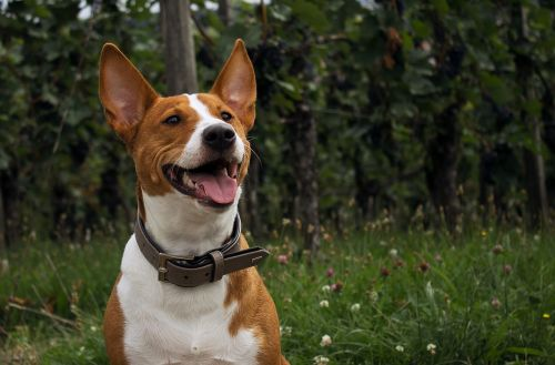 dog nature portrait