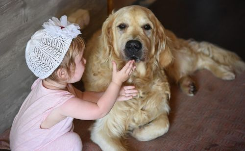 dog girl retriever
