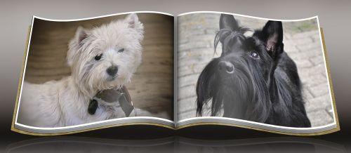 dog westie scottish terrier