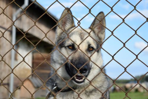 dog chained kennel
