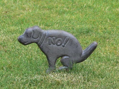 dog ban grass